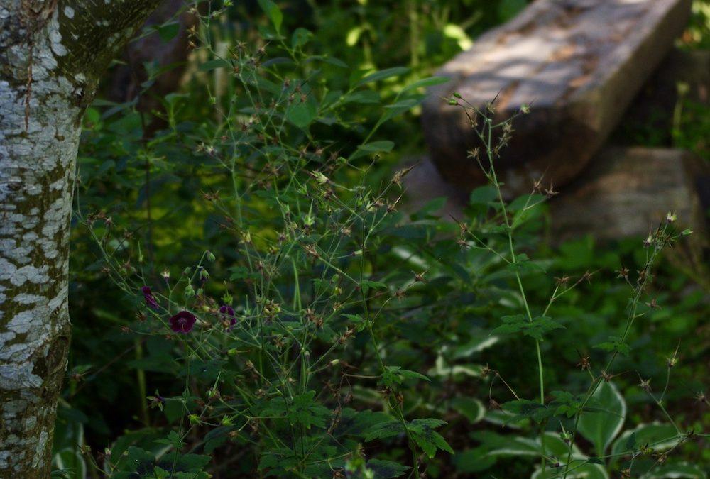 Bilder från trädgården tidig juli
