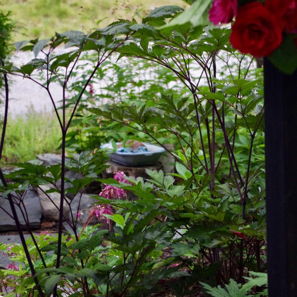 Insektsbadet skymtar genom bladverket i den nyrenoverad plantering på framsidan.