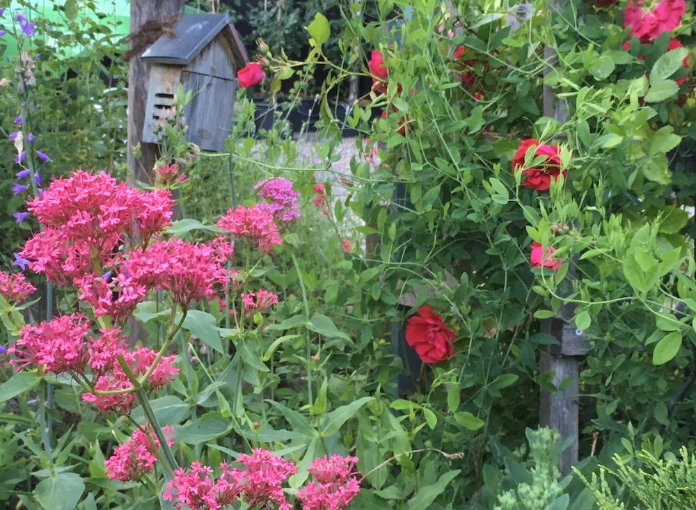 Robust och lite vild trädgård med boplats för nyckelpigor