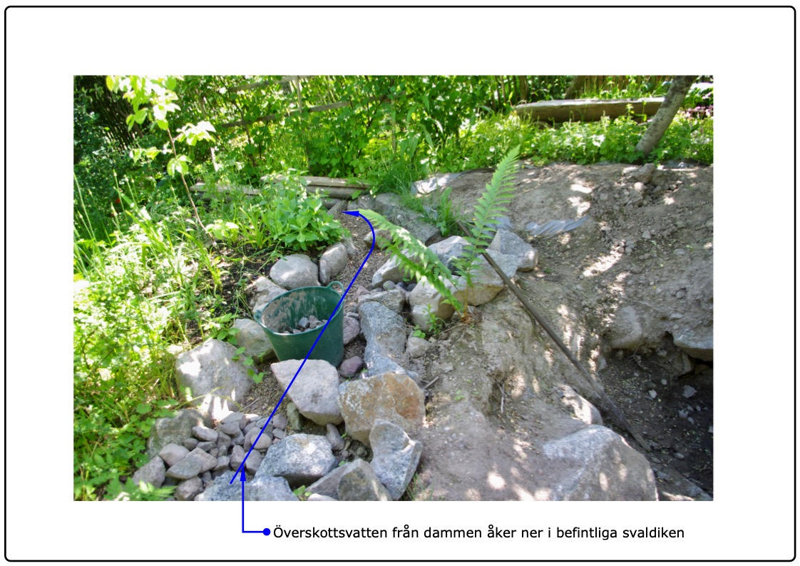 Överskottsvattnet från dammen är tänkt att åka ner i befintliga svaldiken och kommer växterna i skogsträdgården tillgodo.