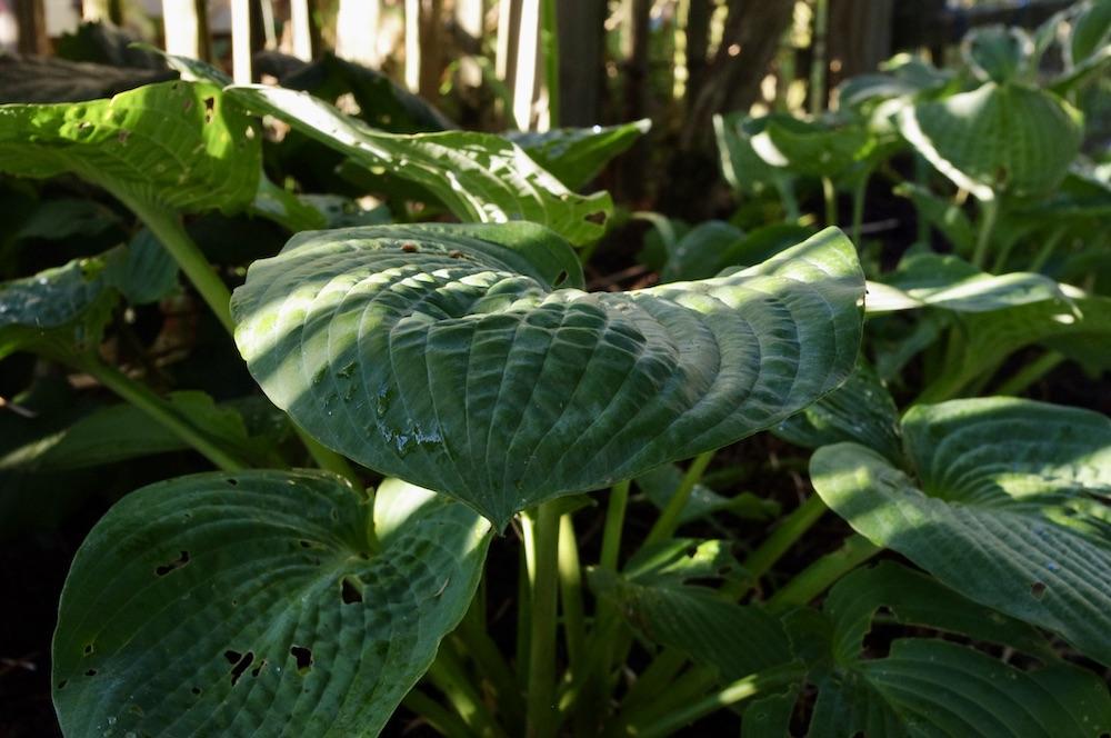Höstdrömmar i trädgården och på lotten
