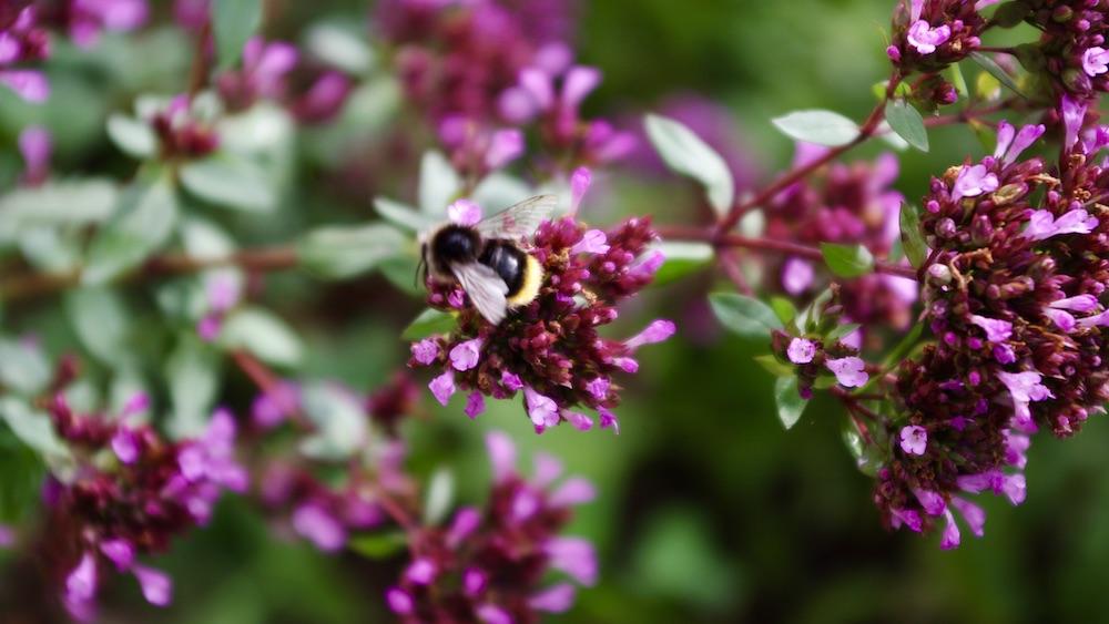 Inga bekämpningsmedel i våra trädgårdar!
