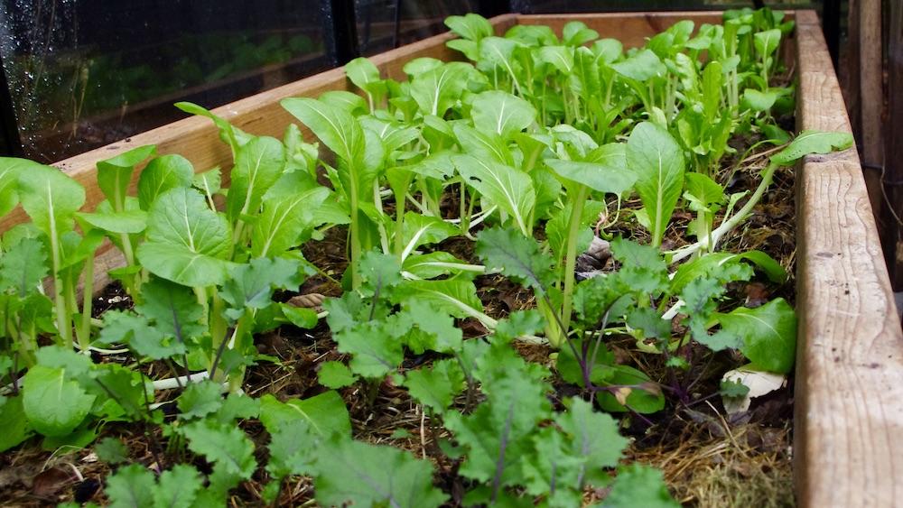 Växthustips från en odlare