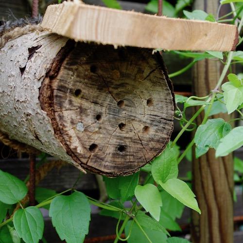 Insektslägenhet med 5mm hål och utskjutande tak