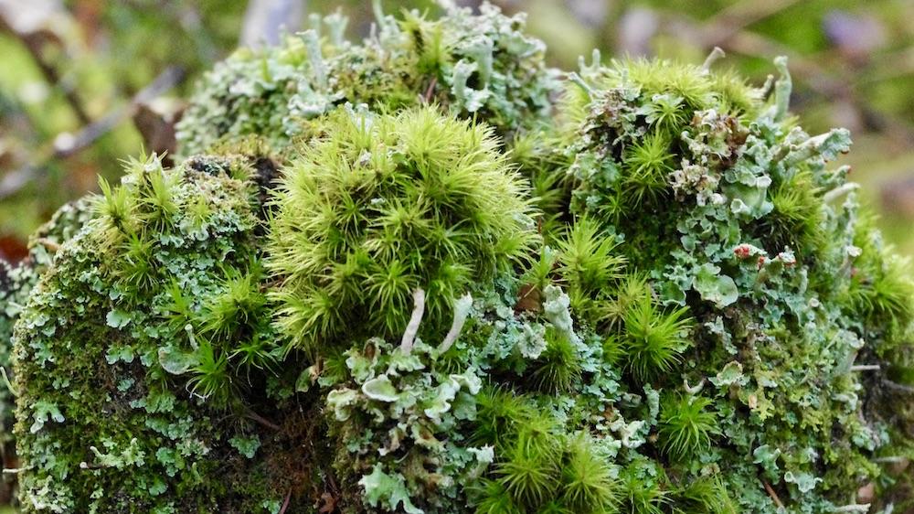 Skogspromenad med mossfilosoferande