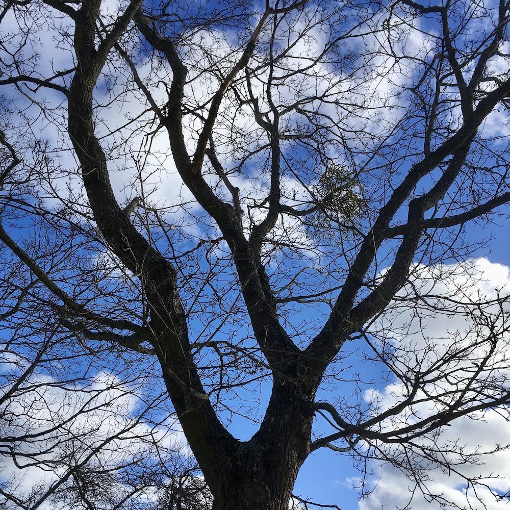 Många skatter kan gömma sig i ett gammalt träd